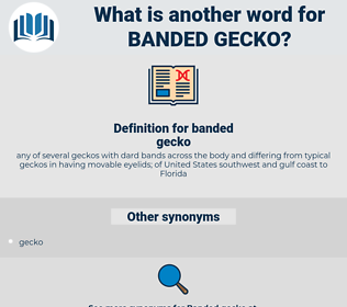 banded gecko, synonym banded gecko, another word for banded gecko, words like banded gecko, thesaurus banded gecko