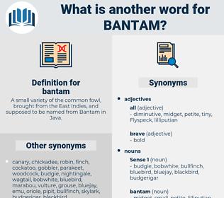 bantam, synonym bantam, another word for bantam, words like bantam, thesaurus bantam