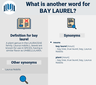 bay laurel, synonym bay laurel, another word for bay laurel, words like bay laurel, thesaurus bay laurel
