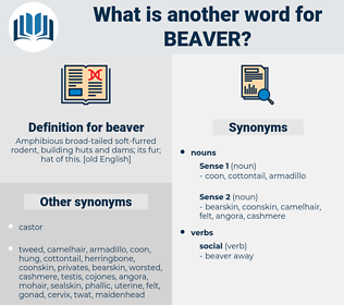 beaver, synonym beaver, another word for beaver, words like beaver, thesaurus beaver