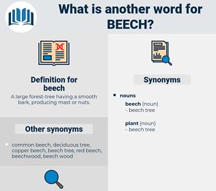 beech, synonym beech, another word for beech, words like beech, thesaurus beech