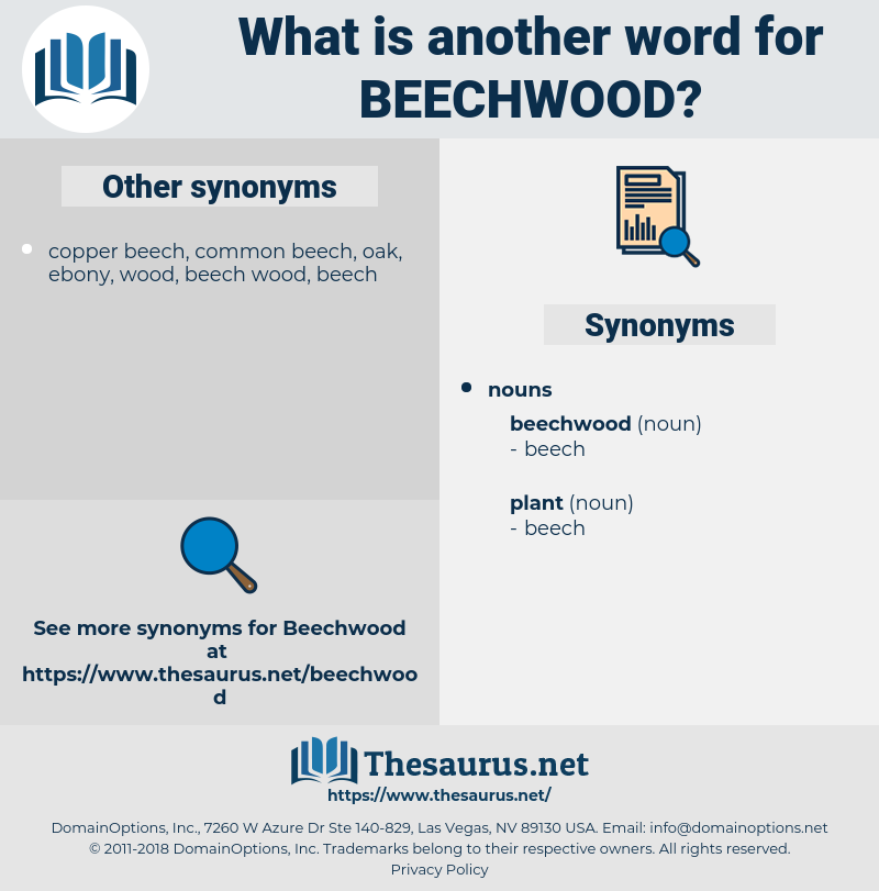 beechwood, synonym beechwood, another word for beechwood, words like beechwood, thesaurus beechwood