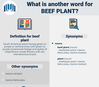 beef plant, synonym beef plant, another word for beef plant, words like beef plant, thesaurus beef plant