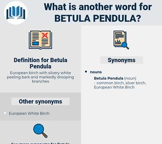 Betula Pendula, synonym Betula Pendula, another word for Betula Pendula, words like Betula Pendula, thesaurus Betula Pendula