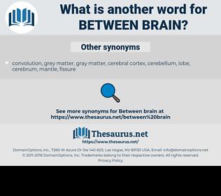 between brain, synonym between brain, another word for between brain, words like between brain, thesaurus between brain