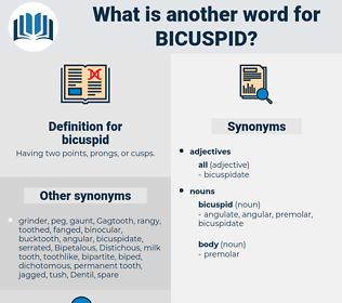 bicuspid, synonym bicuspid, another word for bicuspid, words like bicuspid, thesaurus bicuspid