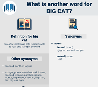 big cat, synonym big cat, another word for big cat, words like big cat, thesaurus big cat