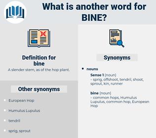 bine, synonym bine, another word for bine, words like bine, thesaurus bine