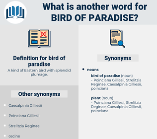 bird of paradise, synonym bird of paradise, another word for bird of paradise, words like bird of paradise, thesaurus bird of paradise