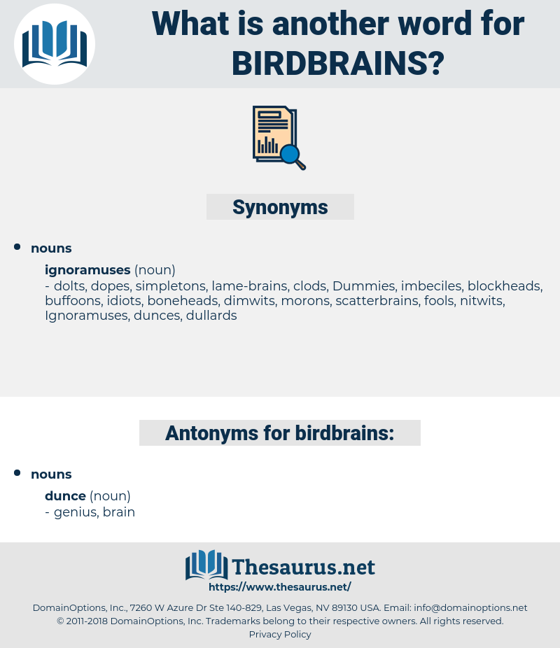 birdbrains, synonym birdbrains, another word for birdbrains, words like birdbrains, thesaurus birdbrains