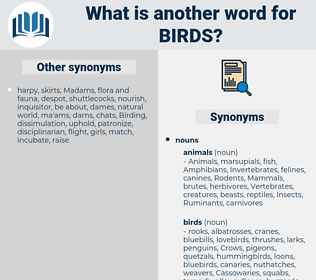 birds, synonym birds, another word for birds, words like birds, thesaurus birds