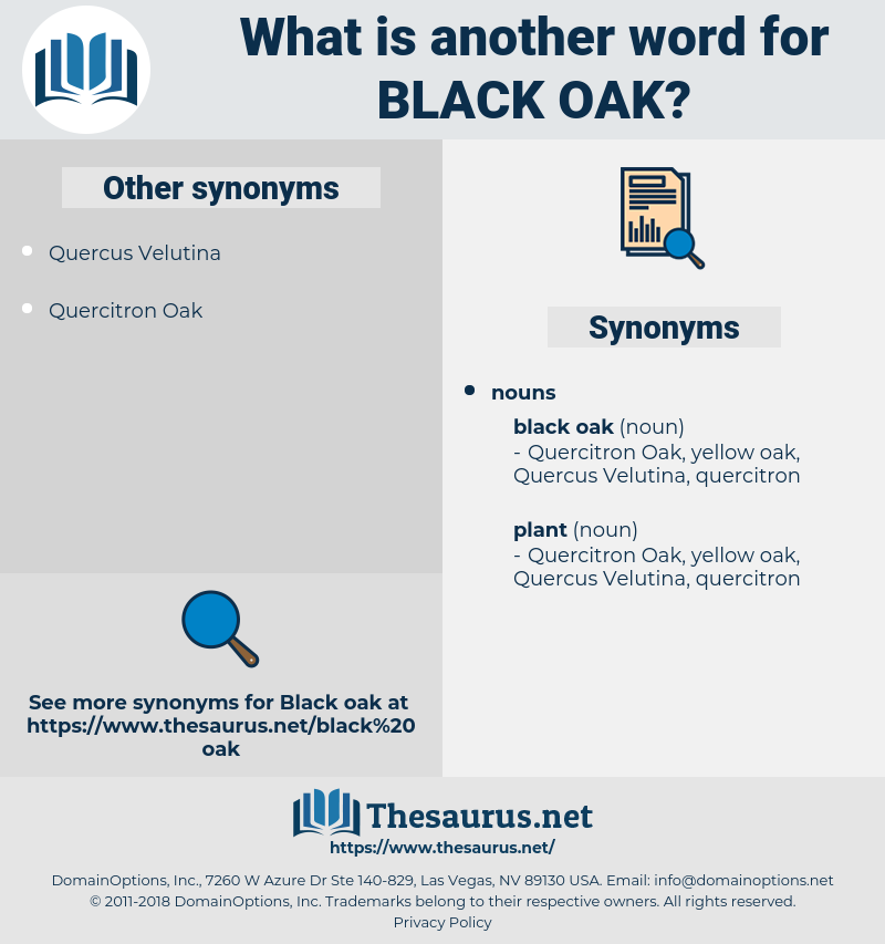 black oak, synonym black oak, another word for black oak, words like black oak, thesaurus black oak