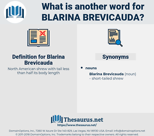 Blarina Brevicauda, synonym Blarina Brevicauda, another word for Blarina Brevicauda, words like Blarina Brevicauda, thesaurus Blarina Brevicauda