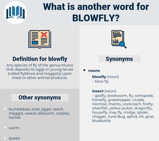 blowfly, synonym blowfly, another word for blowfly, words like blowfly, thesaurus blowfly