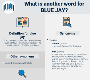 blue jay, synonym blue jay, another word for blue jay, words like blue jay, thesaurus blue jay