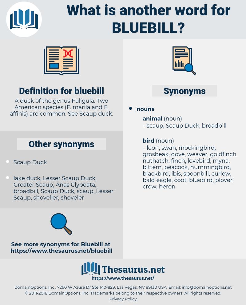 bluebill, synonym bluebill, another word for bluebill, words like bluebill, thesaurus bluebill