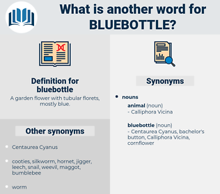 bluebottle, synonym bluebottle, another word for bluebottle, words like bluebottle, thesaurus bluebottle