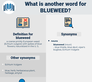 blueweed, synonym blueweed, another word for blueweed, words like blueweed, thesaurus blueweed