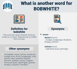 bobwhite, synonym bobwhite, another word for bobwhite, words like bobwhite, thesaurus bobwhite