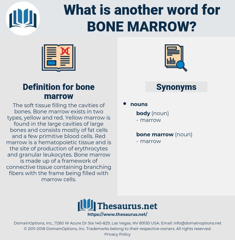 bone marrow, synonym bone marrow, another word for bone marrow, words like bone marrow, thesaurus bone marrow