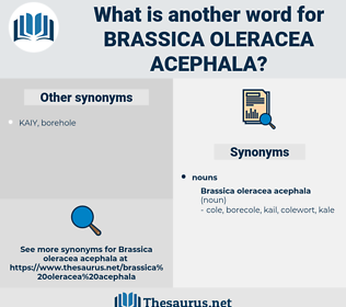 Brassica Oleracea Acephala, synonym Brassica Oleracea Acephala, another word for Brassica Oleracea Acephala, words like Brassica Oleracea Acephala, thesaurus Brassica Oleracea Acephala