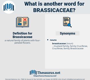 Brassicaceae, synonym Brassicaceae, another word for Brassicaceae, words like Brassicaceae, thesaurus Brassicaceae