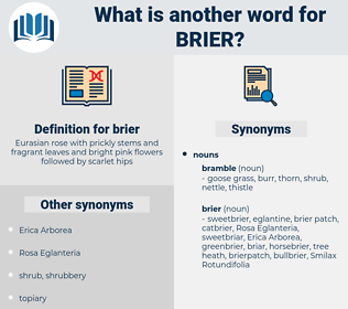 brier, synonym brier, another word for brier, words like brier, thesaurus brier