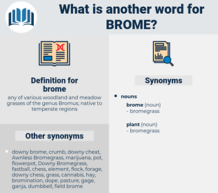 brome, synonym brome, another word for brome, words like brome, thesaurus brome