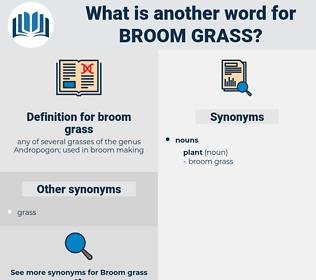 broom grass, synonym broom grass, another word for broom grass, words like broom grass, thesaurus broom grass