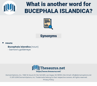 Bucephala Islandica, synonym Bucephala Islandica, another word for Bucephala Islandica, words like Bucephala Islandica, thesaurus Bucephala Islandica