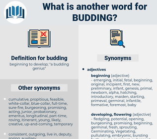 budding, synonym budding, another word for budding, words like budding, thesaurus budding