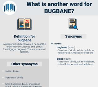 bugbane, synonym bugbane, another word for bugbane, words like bugbane, thesaurus bugbane