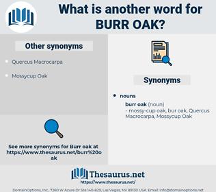 burr oak, synonym burr oak, another word for burr oak, words like burr oak, thesaurus burr oak