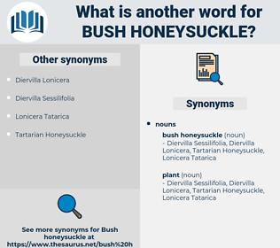 bush honeysuckle, synonym bush honeysuckle, another word for bush honeysuckle, words like bush honeysuckle, thesaurus bush honeysuckle