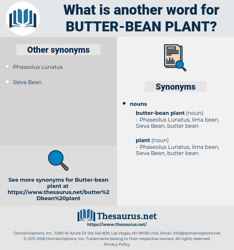 butter-bean plant, synonym butter-bean plant, another word for butter-bean plant, words like butter-bean plant, thesaurus butter-bean plant