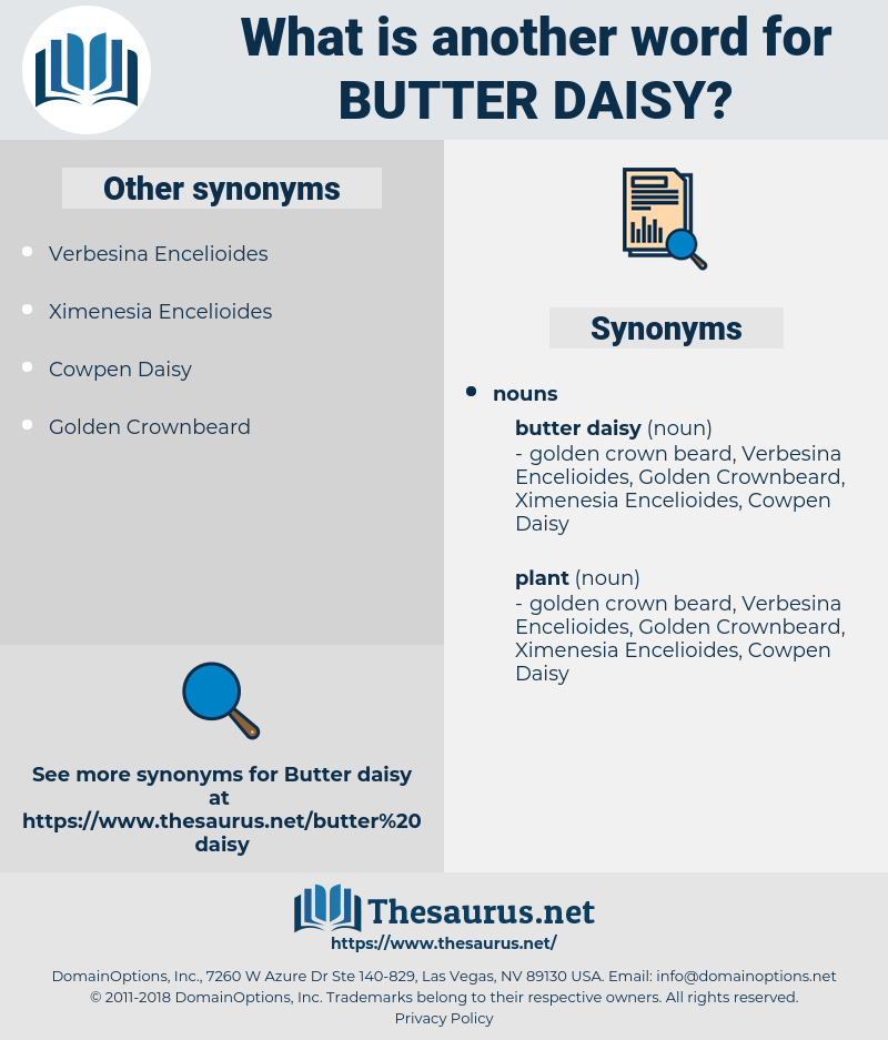 butter daisy, synonym butter daisy, another word for butter daisy, words like butter daisy, thesaurus butter daisy