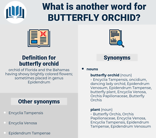 butterfly orchid, synonym butterfly orchid, another word for butterfly orchid, words like butterfly orchid, thesaurus butterfly orchid