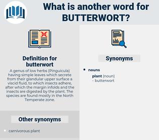 butterwort, synonym butterwort, another word for butterwort, words like butterwort, thesaurus butterwort