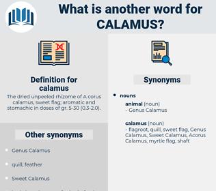calamus, synonym calamus, another word for calamus, words like calamus, thesaurus calamus