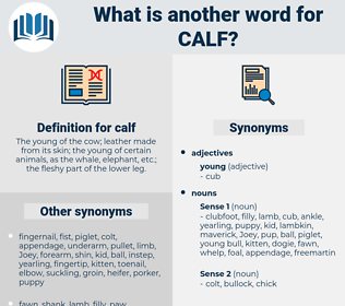 calf, synonym calf, another word for calf, words like calf, thesaurus calf