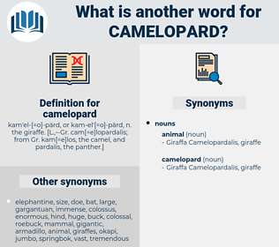 camelopard, synonym camelopard, another word for camelopard, words like camelopard, thesaurus camelopard