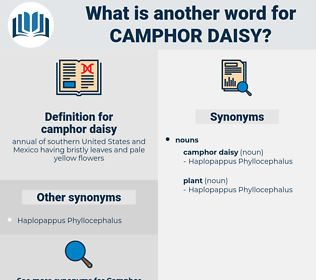 camphor daisy, synonym camphor daisy, another word for camphor daisy, words like camphor daisy, thesaurus camphor daisy