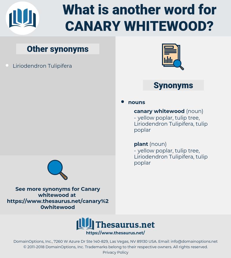 canary whitewood, synonym canary whitewood, another word for canary whitewood, words like canary whitewood, thesaurus canary whitewood