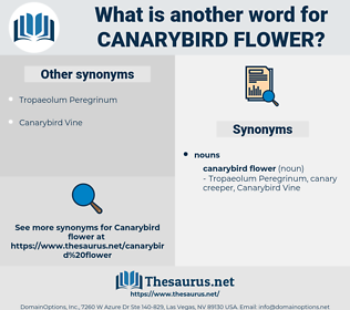 Canarybird Flower, synonym Canarybird Flower, another word for Canarybird Flower, words like Canarybird Flower, thesaurus Canarybird Flower