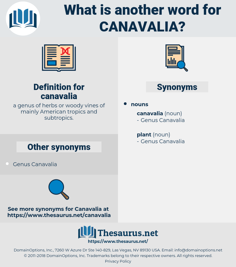 canavalia, synonym canavalia, another word for canavalia, words like canavalia, thesaurus canavalia