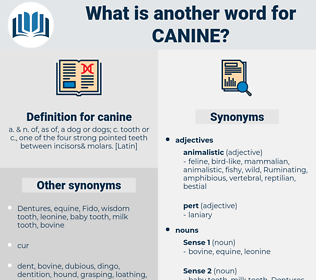 canine, synonym canine, another word for canine, words like canine, thesaurus canine