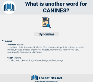 canines, synonym canines, another word for canines, words like canines, thesaurus canines