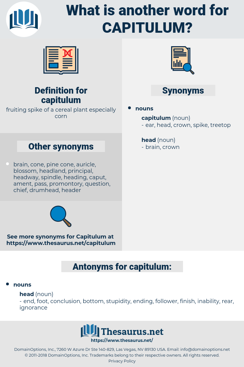 capitulum, synonym capitulum, another word for capitulum, words like capitulum, thesaurus capitulum