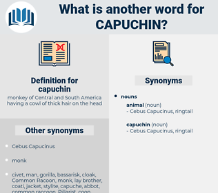 capuchin, synonym capuchin, another word for capuchin, words like capuchin, thesaurus capuchin