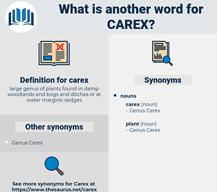 carex, synonym carex, another word for carex, words like carex, thesaurus carex
